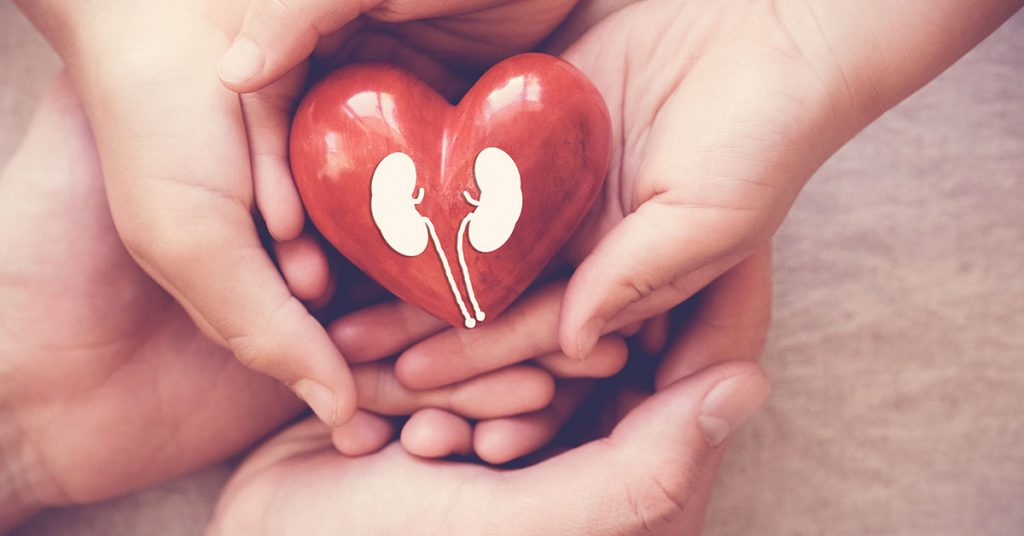 hands holiding red heart with kidney, world kidney day; blog: Are Kidney Disease and Heart Failure Linked?