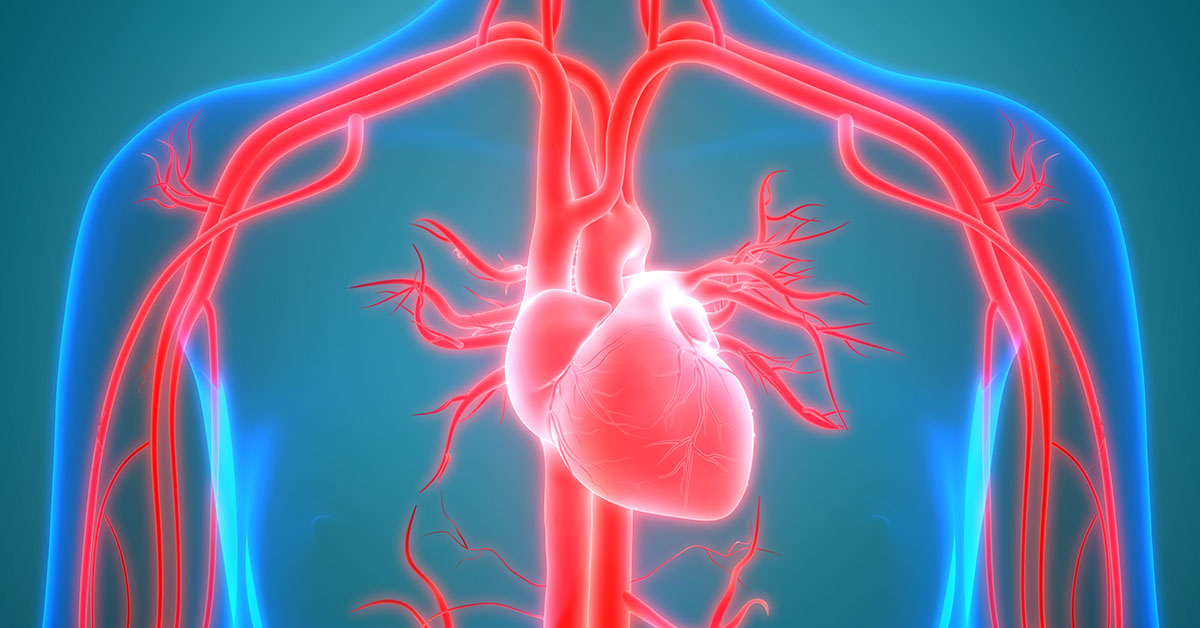 Human Circulatory System Anatomy; blog: When it comes to understanding your heart health, it's important to be familiar with the parts of the cardiovascular system and how the system works.